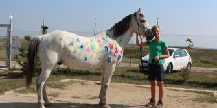 Un cal batut si abuzat a devenit