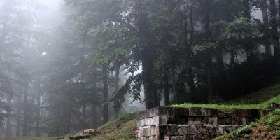 Padurea din Sarmizegetusa Regia ar putea disparea in cativa ani. 17 hectare sunt vizate: