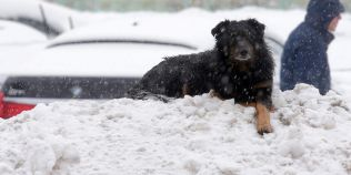 VIDEO Moscova, lovita de o furtuna de zapada de o intensitate fara precedent. Cel putin o persoana a murit